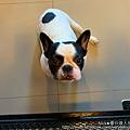 曼谷達人尼克 HoPs Dog Cafe-6.jpg