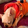 曼谷達人尼克 HoPs Dog Cafe-5.jpg