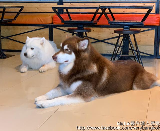 曼谷達人尼克 HoPs Dog Cafe-7.jpg