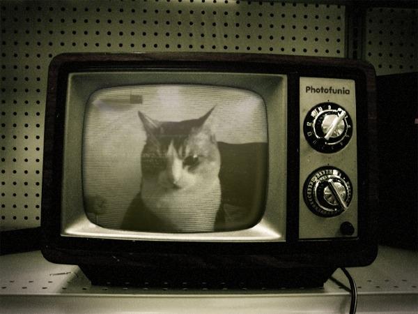 歡迎收看Momo寵物秀