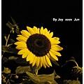 09.06.19 夜拍向日葵