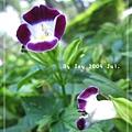 植物,三等分構圖法練習
