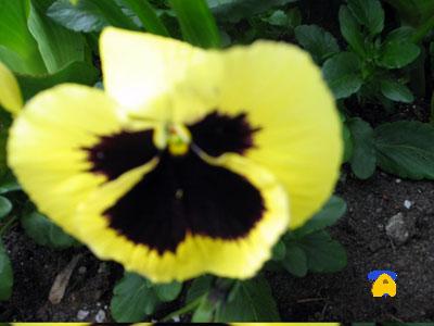 tpmcflower.jpg