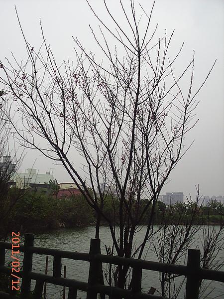 PIC_0041.JPG