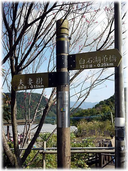 0120白石湖吊橋050