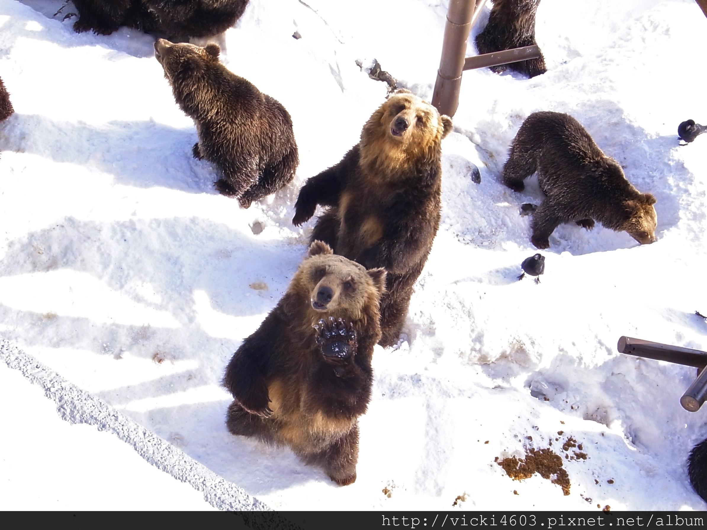 拜托給我熊餅乾