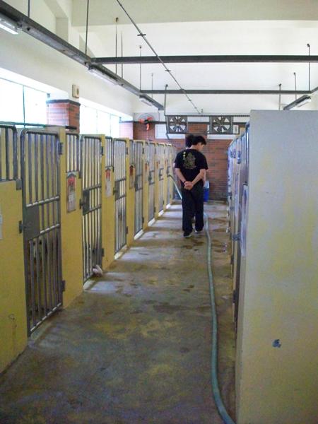 動物收容所14