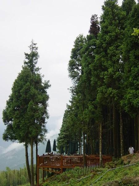 兩後的竹林真是美