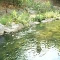 清綠的溪水真讓人舒服