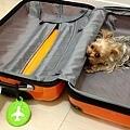 臭狗咬行李箱