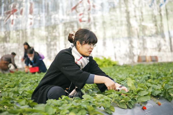 採草莓 (6).jpg