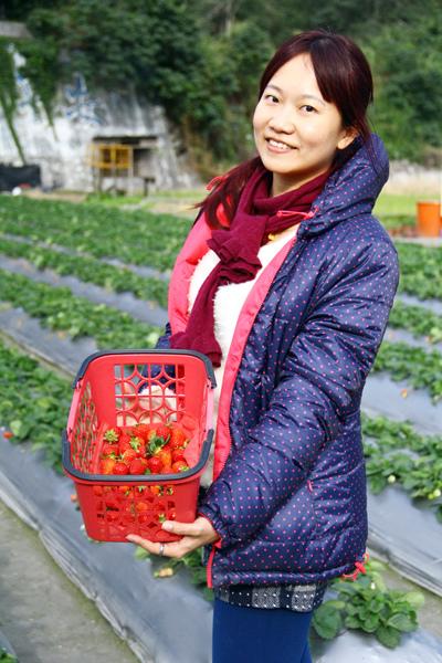 採草莓 (10).JPG