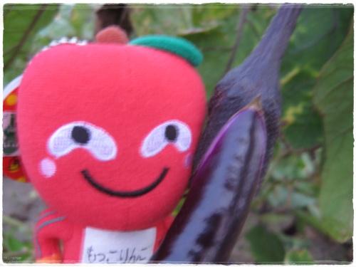 這是茄子喔!!