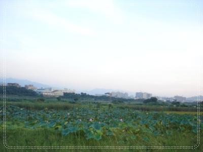 生態池~蓮花