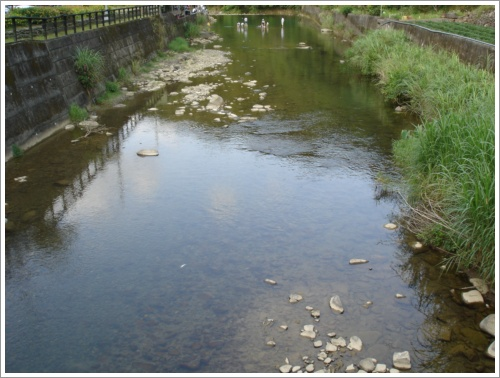 溪水超清澈