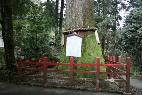 很大ㄉ樹~神木ㄅ