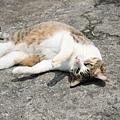 曬太陽的猫