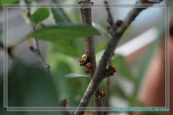 小小ㄉ花苞