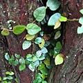 樹縫中的綠葉