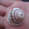 漂亮ㄉ貝殼