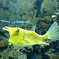 不知名ㄉ魚~超可愛ㄉ