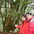 攝於:檜木林棧道