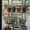 植物日記_200514_0135.jpg