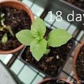 18day.jpg