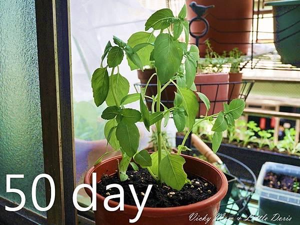 50day (2).JPG