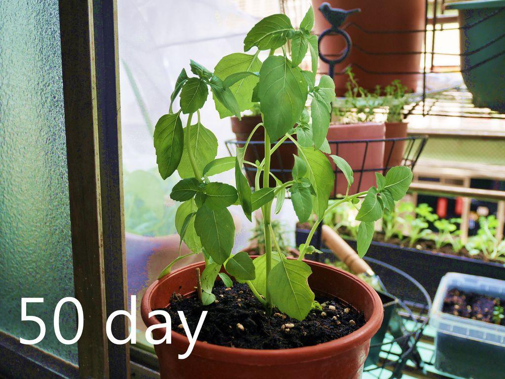 50day (3).JPG