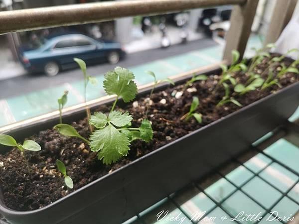 植物日記_200514_0012.jpg