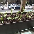 植物日記_200514_0011.jpg