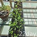 植物日記_200514_0126.jpg