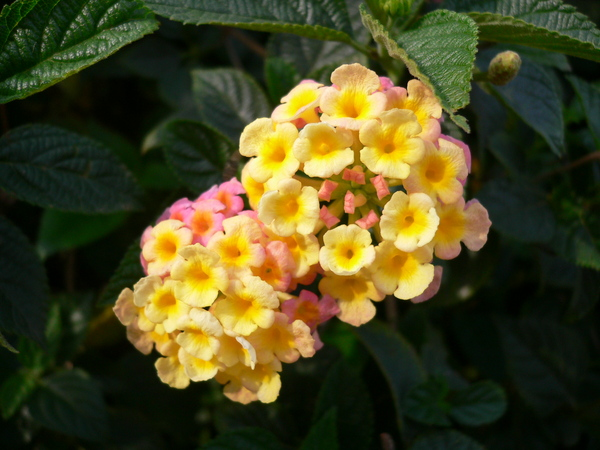 可愛ㄉ小花兒