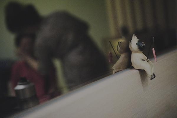 小貓是這場喜事的見證人之一:P