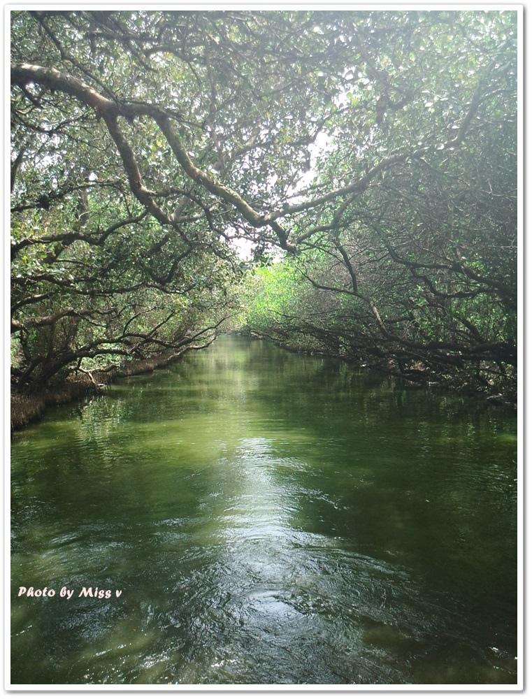 【台南∣景點】四草綠色隧道,有著台版亞馬遜河之稱,美翻了