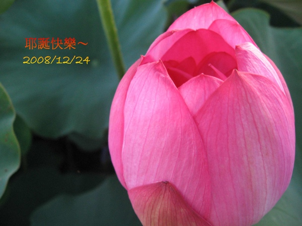 IMG_0229-1.jpg