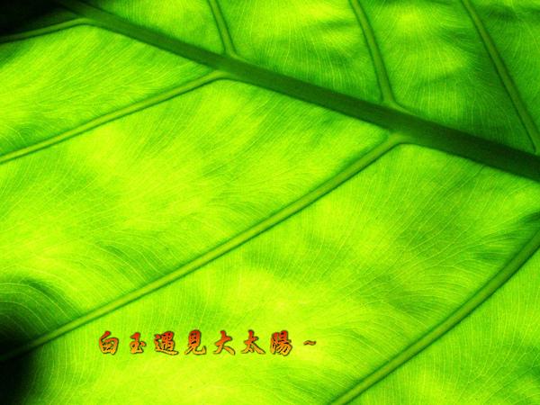 SANY0369-2.jpg