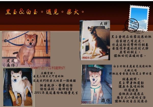 柴犬-11.jpg