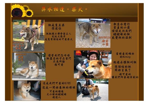 柴犬3-1.jpg