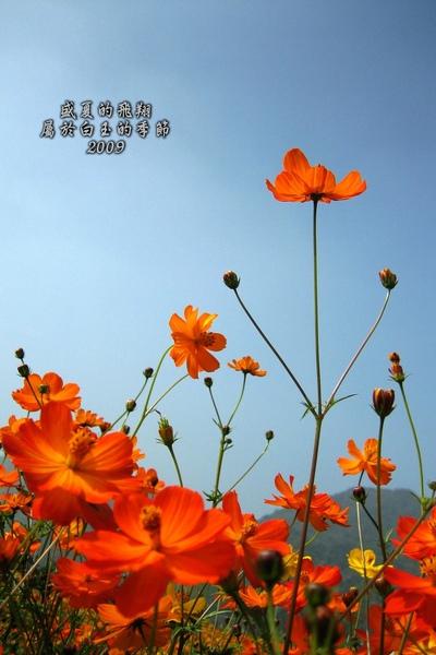 IMG_0089-.1.jpg