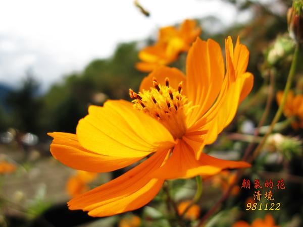 IMG_8586.jpg