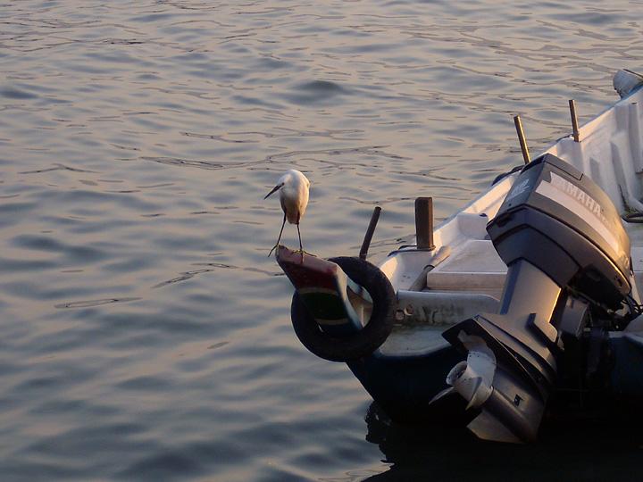 孤舟白鷺.jpg