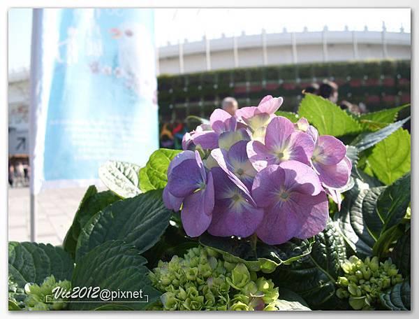 flowershowTP-06.jpg