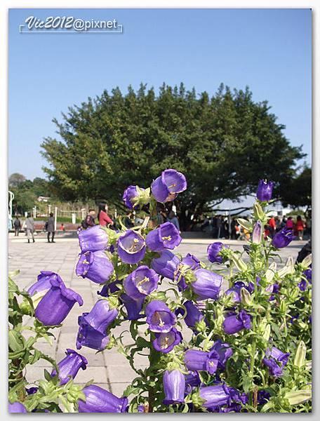 flowershowTP-07.jpg