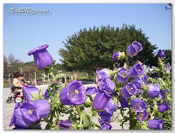 flowershowTP-08.jpg