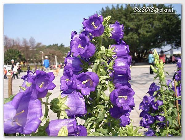 flowershowTP-09.jpg