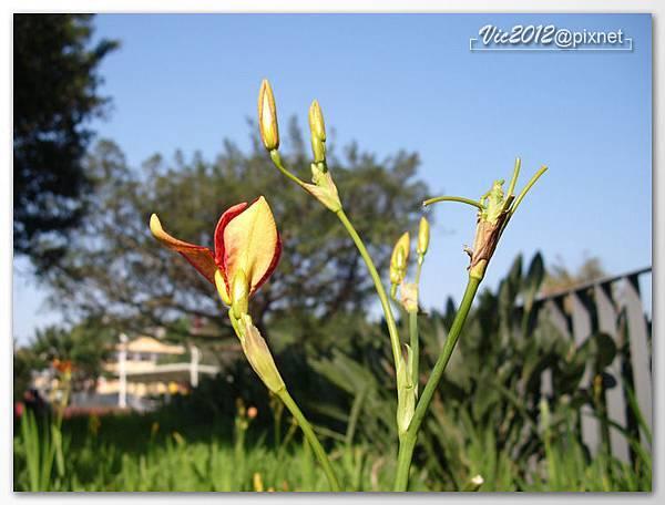 flowershowTP-10.jpg