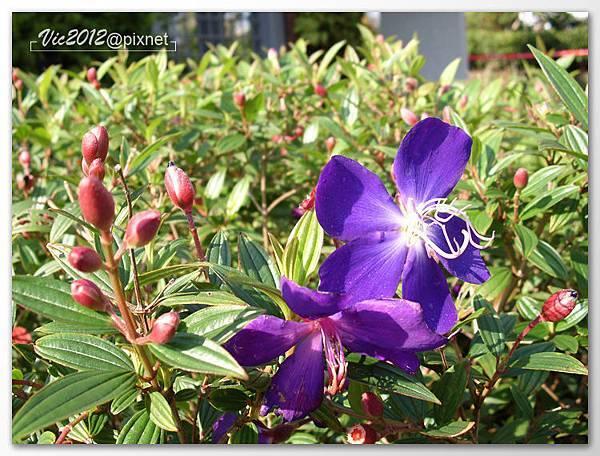 flowershowTP-18.jpg