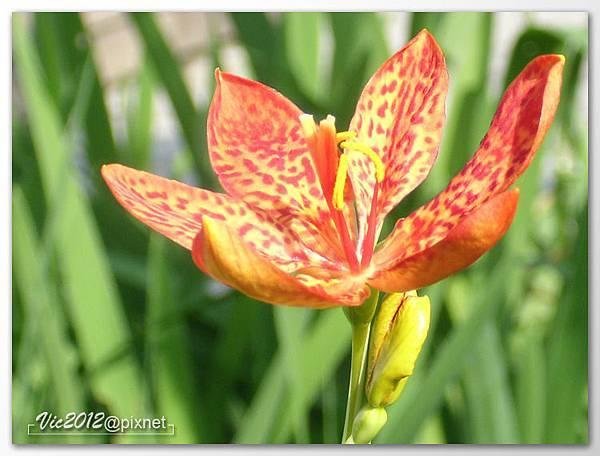 flowershowTP-25.jpg